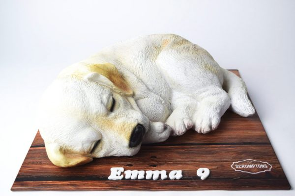Labrador-Puppy-Dog-Cake