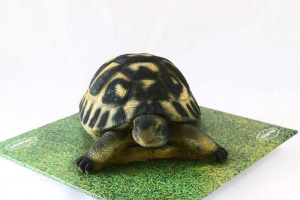 Tortoise-Cake