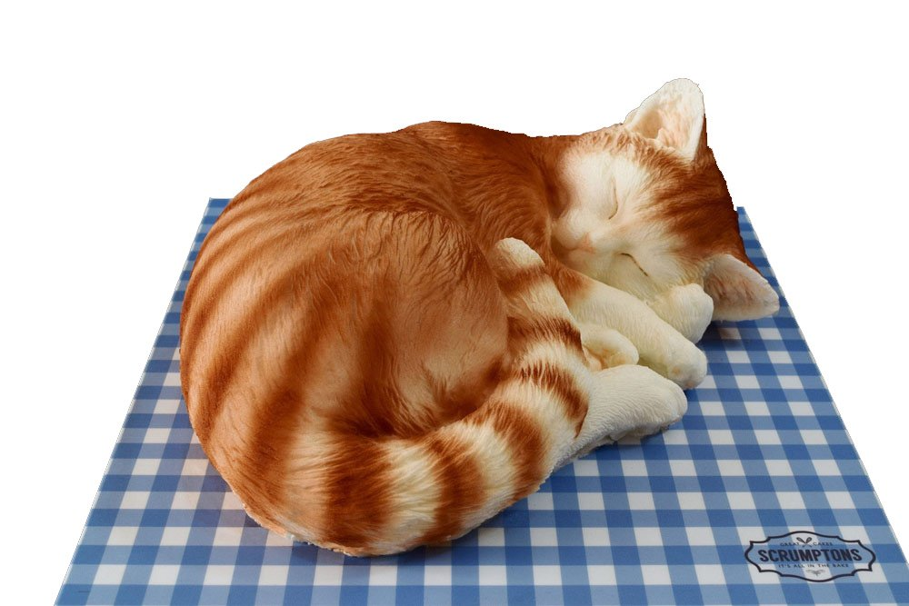 cat-cake-1.jpg